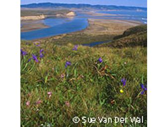 Guided Hike and Picnic - Pt. Reyes National Seashore, Estero Trail - May 12, 2012