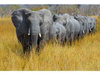 Botswana Elephants - Metal Print Photo by Murali Narayanan