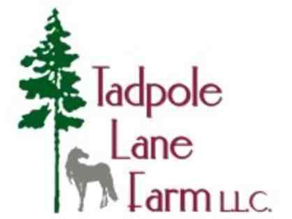 3 lessons at Tadpole Lane Farm