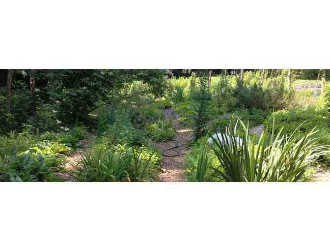 How does your garden grow? Suki Roth's Medicinal Herb Garden $50 gift certificate