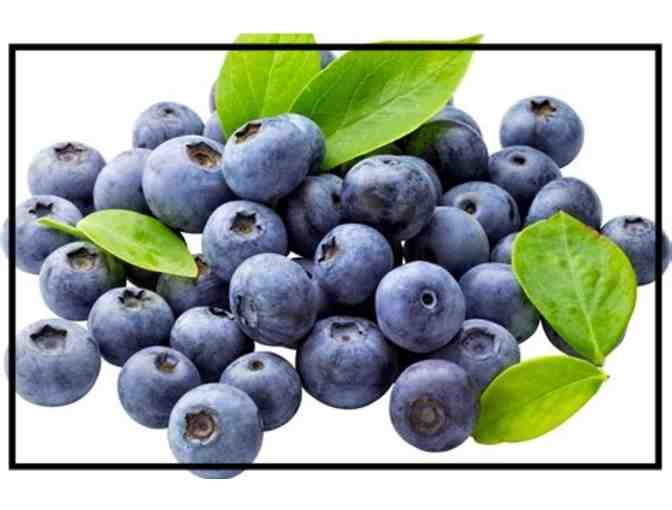 Blue Smiles with Biodynamic Blueberries! Pick-Ur-Own 1 Gallon #1