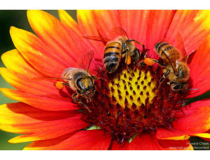 Bee-palooza! Plant a Bee Garden with Viorica Comaniciu!