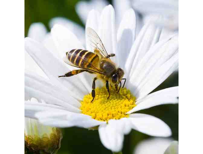 Bee Still! Find clarity and calm sharing the warmth of meditation with Kent Ford