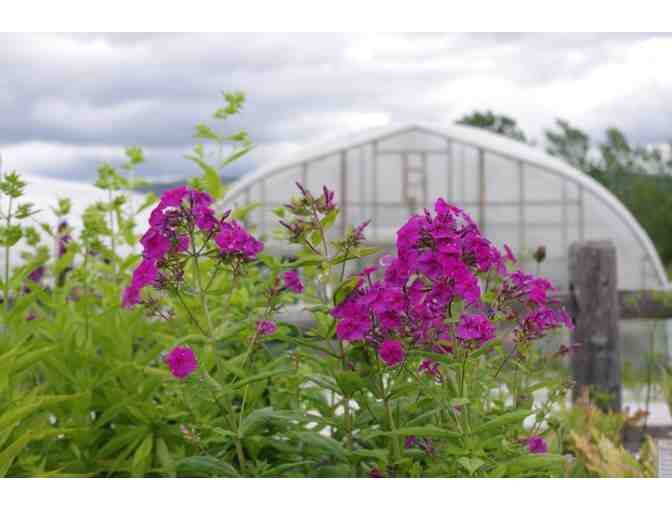 $25 Gift Card to use at Red Wagon Plants - Photo 1