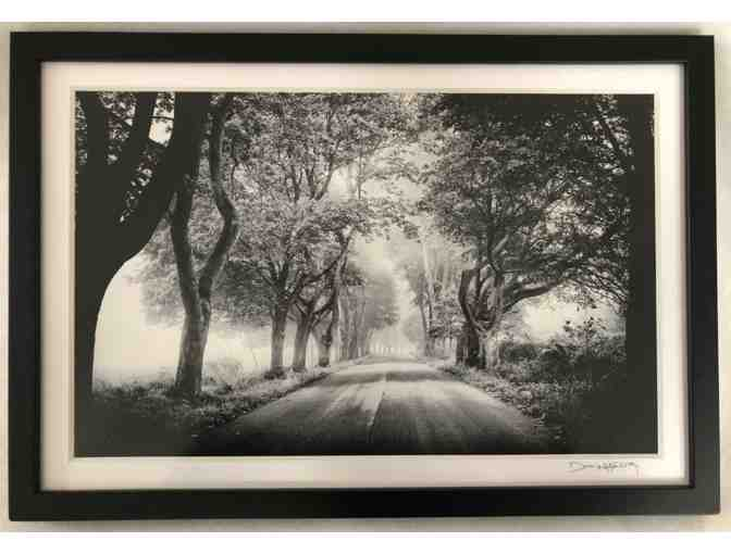 'The Trees of Parsons Road' print by Phosart Photography