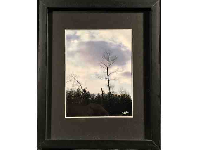 "9"" x 11"" Matted and framed art photograph of tree - Photo 1"