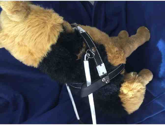 German Shepherd in Harness