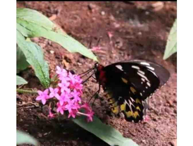 $35 Butterfly Place Gift Certificate