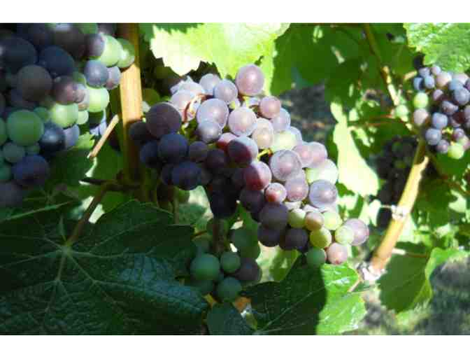 White Pinot Gris from Aurora Vines
