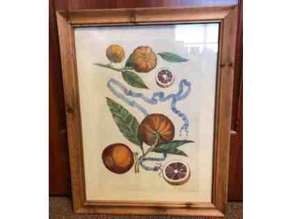Vintage Fruit Print from Gates Home Furnishing