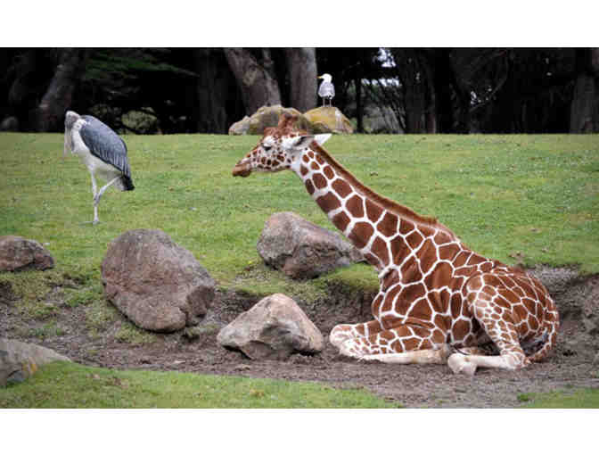 Bring a Friend and Visit the San Francisco Zoo!