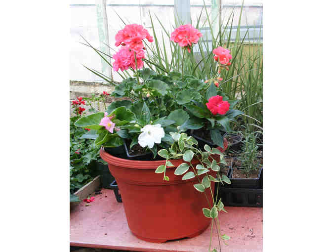 "12"" Pot Filled With Your Choice of Annuals - Photo 1"