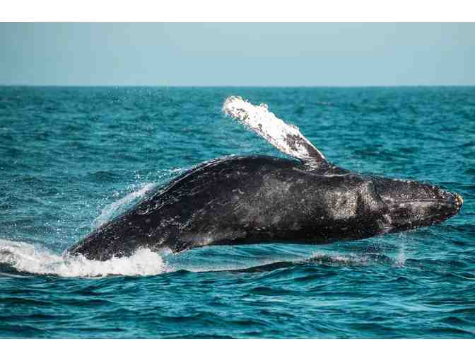 Newport Landing Whale Watching: $100 Gift Card