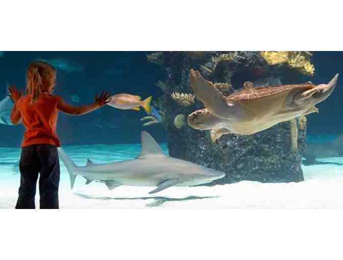 2 Admission Tickets to Newport Aquarium