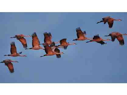 Sand Hill Cranes Viewing near Wilcox with Eb Eberlein on 4 January 2020 (#2)