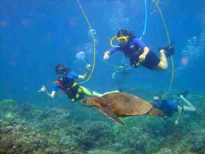 Underwater Adventure for 4 - SNUBA, Scuba Diving or Discovery Scuba Diving