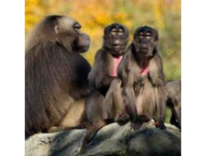 Bronx Zoo: Four General Admission Tickets