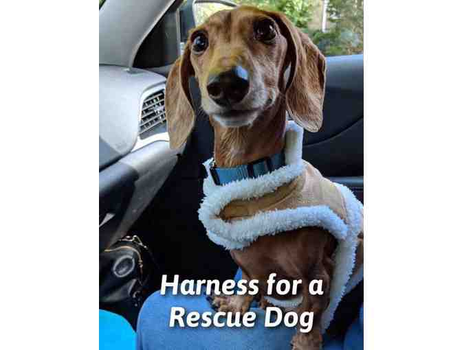 Harness for a Rescue Dog