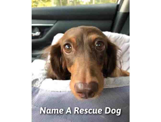 Name a Rescue Dog