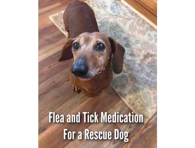 Flea and Tick Medication for a Rescue Dog