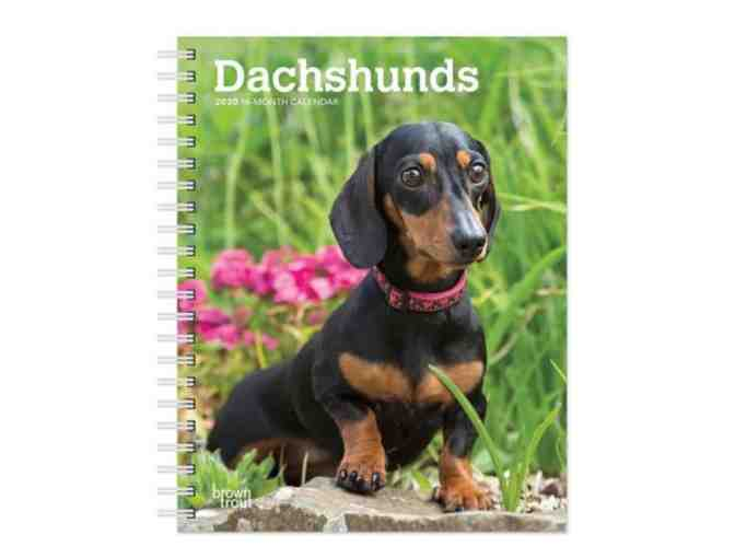 2020 Dachshund 16-Month Calendar #2 - Photo 1