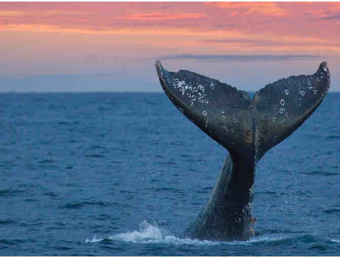 TWO PASSES FOR 2-2 1/2 HOUR WHALE WATCHING CRUISE IN NEWPORT BEACH