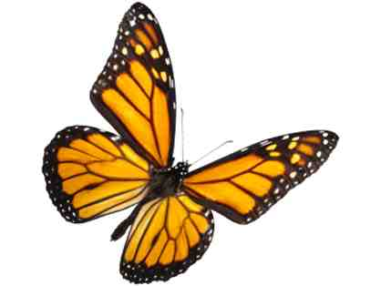 $35 Gift Certificate to the Butterfly Place (Westford, MA)