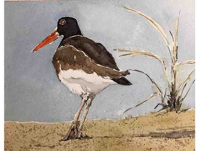 Oystercatcher Dance - Framed Print