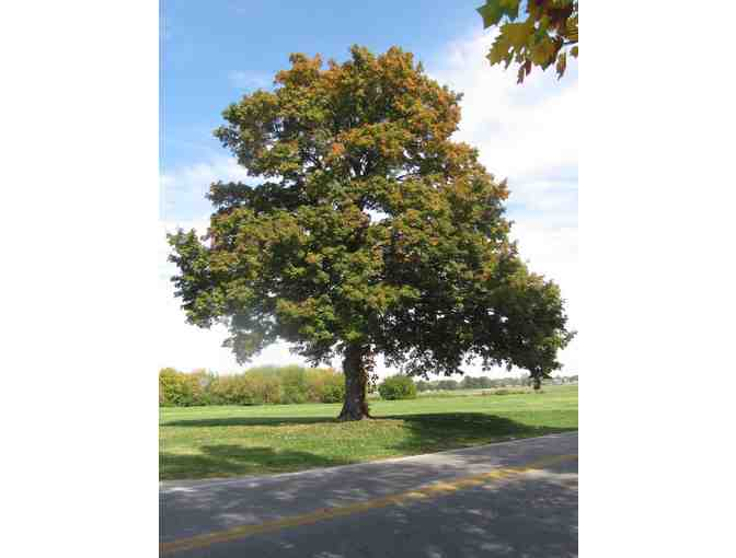 Big Trees, Inc.--$250 Gift Certificate