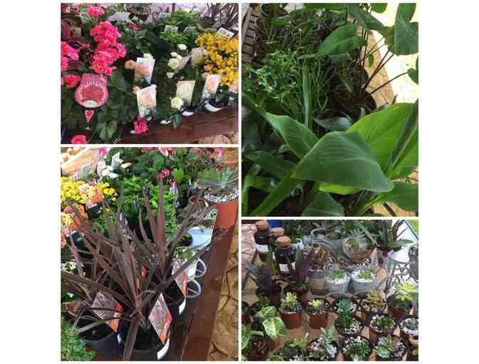 5 Plants  - Hope Farm Nursery, Biggenden (local to QLD only)