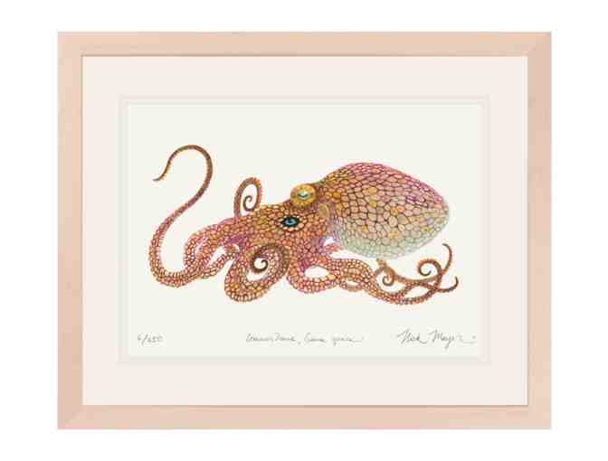 Octopus Limited Edition Print by Nick Mayer