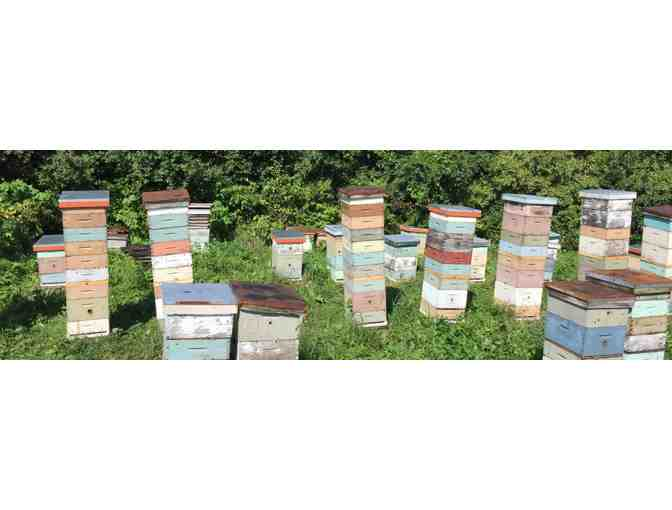 Four Hours of Bee Keeping Consultation