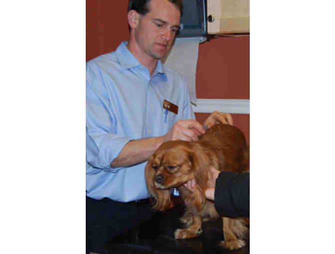 Initial Consult with Holistic Vet