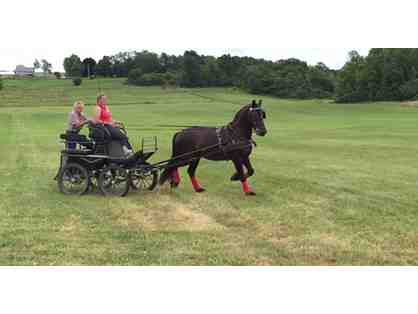 Horse Drawn Carriage Ride from Middlebrook Friesian Farm