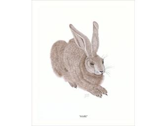 'Hare' Drawing