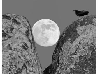 'Raven's Moon' - An Original B&W Photo