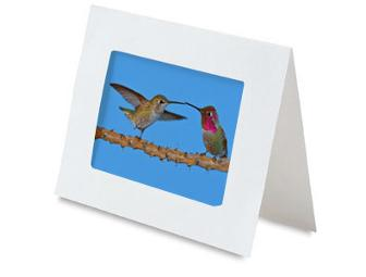 Set of 4 Hummingbird Greeting Cards