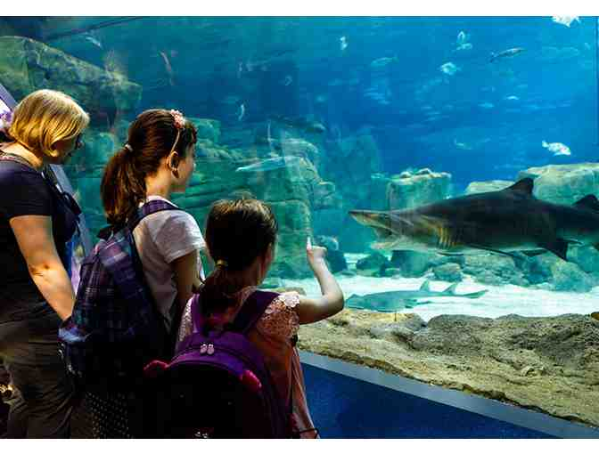 New England Aquarium: Two (2) Admission Passes
