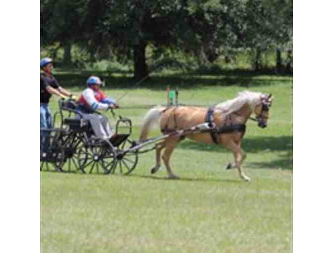 Private two-hour carriage driving lesson at the Carriage Barn, Kensington