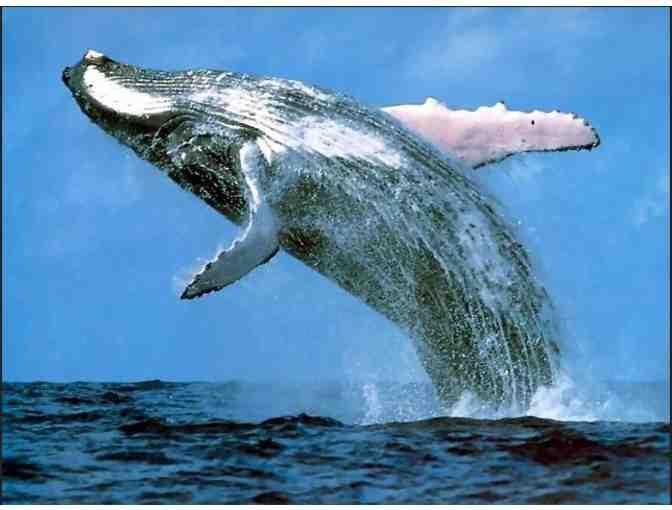Whale Watch with New England Aquarium