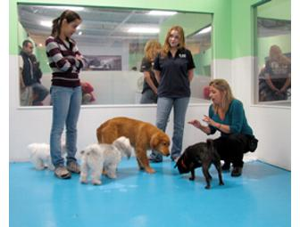 Kate Perry - Puppy Socialization Class