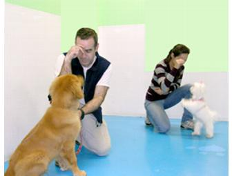 Kate Perry - Basic Obedience Group Class
