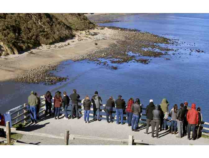 Elephant Seals for Lunch! with Dr. Sarah Allen & Jennifer Stock for 10, Children Welcome!
