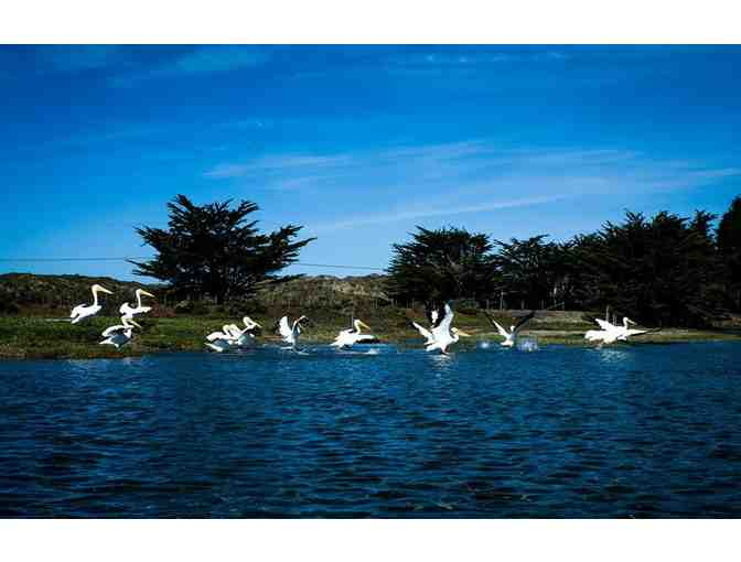 Guided Kayak Tour of the Jenner Estuary with Picnic, Lunch for 4 people with Smart Tours