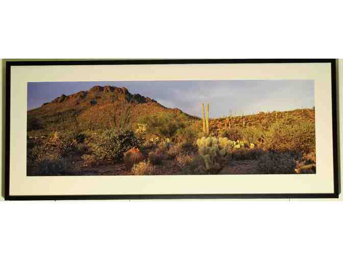 framed art photo #2  (55.5' x 23.5') 'Diversity of Life, Saguaro NP' by Wyn Hoag
