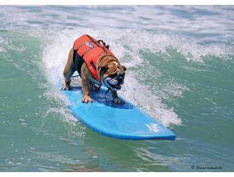 Surf with two of our Reality Star Dogs!!