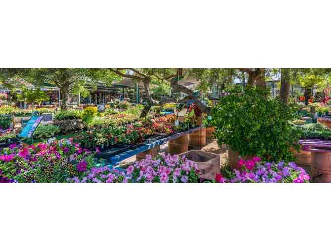 Harlow Gardens: $50 Gift Card #4 - Photo 4