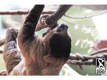 A Behind the Scenes VIP Sloth Encounter at Roger Williams Park Zoo