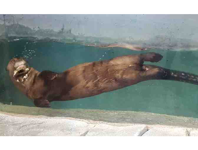 A Behind the Scenes VIP Giant Otter Encounter - Photo 1