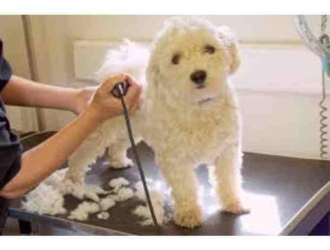 Greyson Place Pet Grooming - One Grooming